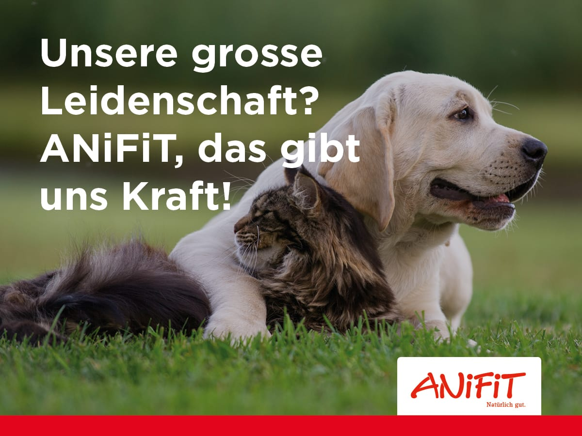 Logo AniFiT