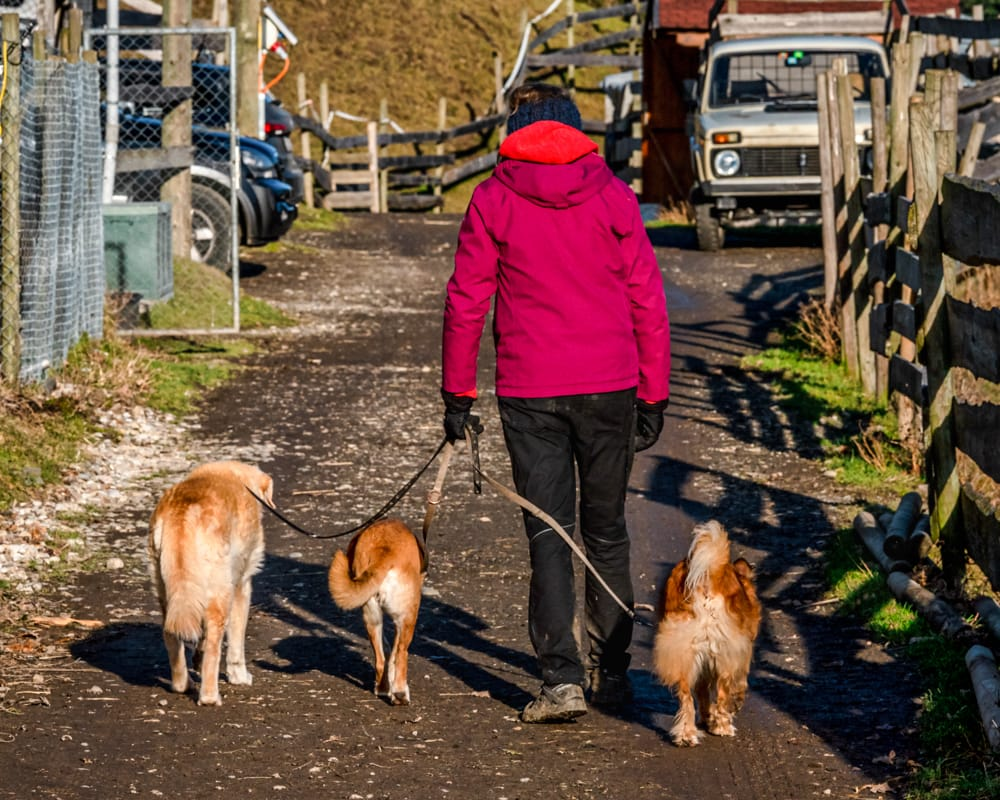 Tier-Asyl Hübeli: Gassigehen mit Hunden
