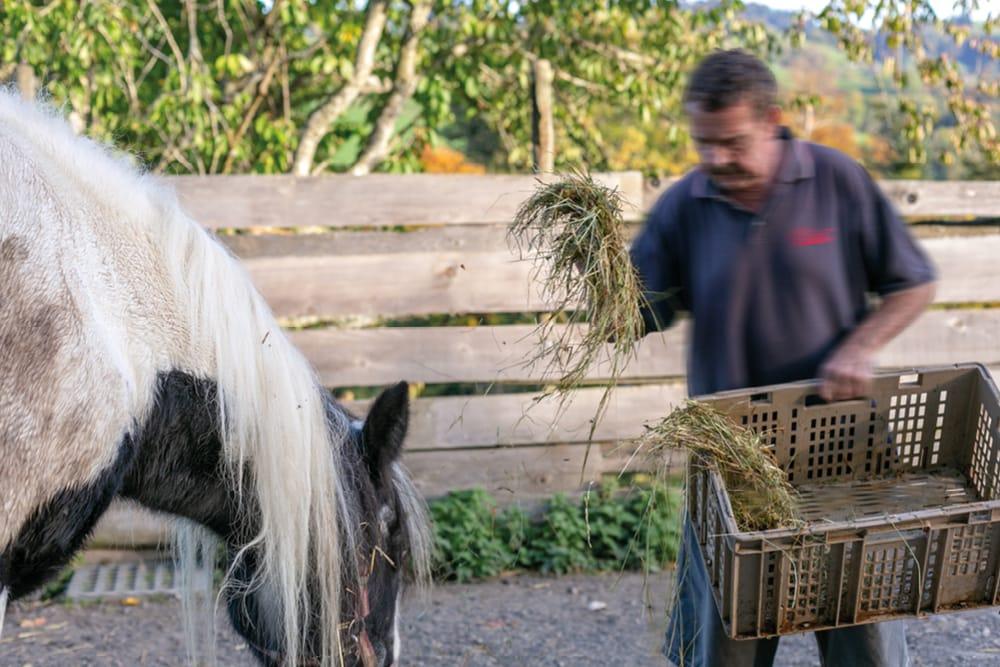 Ein Mitarbeiter versorgt die Pferde mit Heu