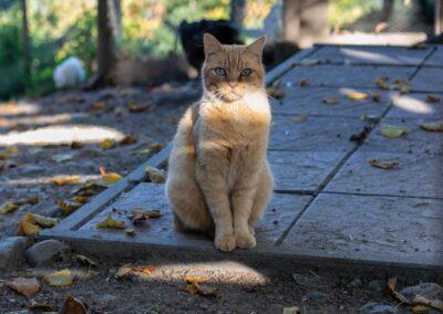 Katze im Tier-Asyl Hübeli
