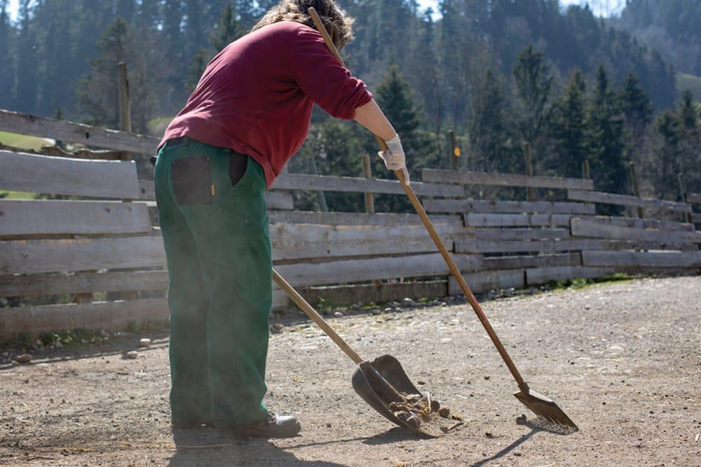 Eine Mitarbeiterin im Tier-Asyl Hübeli nimmt den Pferdemist auf